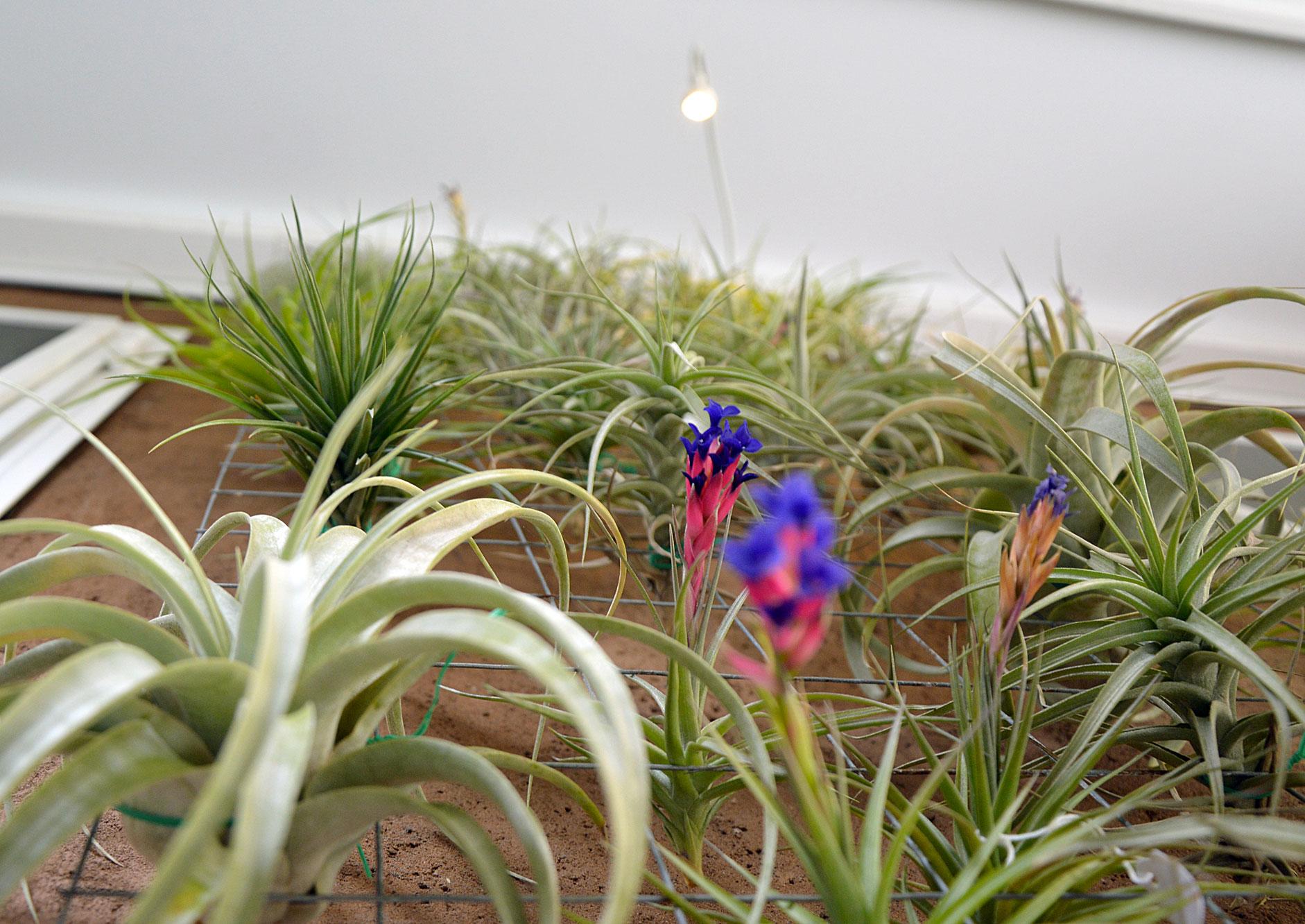 Il giardino in una stanza fabio masotta for Costruire una stanza all aperto