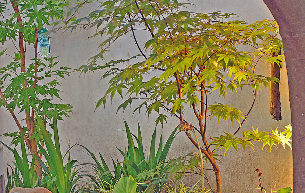 Mandarini dolcissimi e Giappone