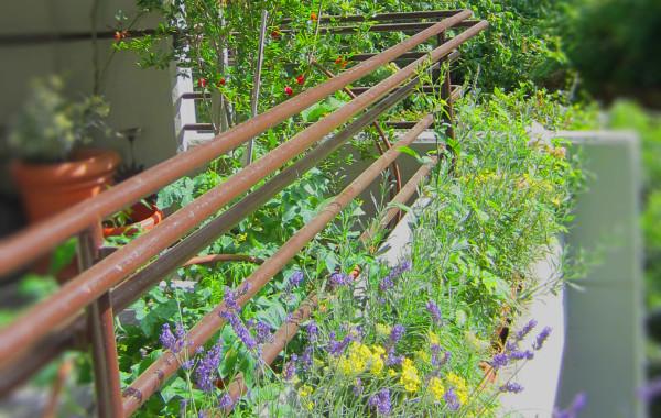 Balconi sempre fioriti