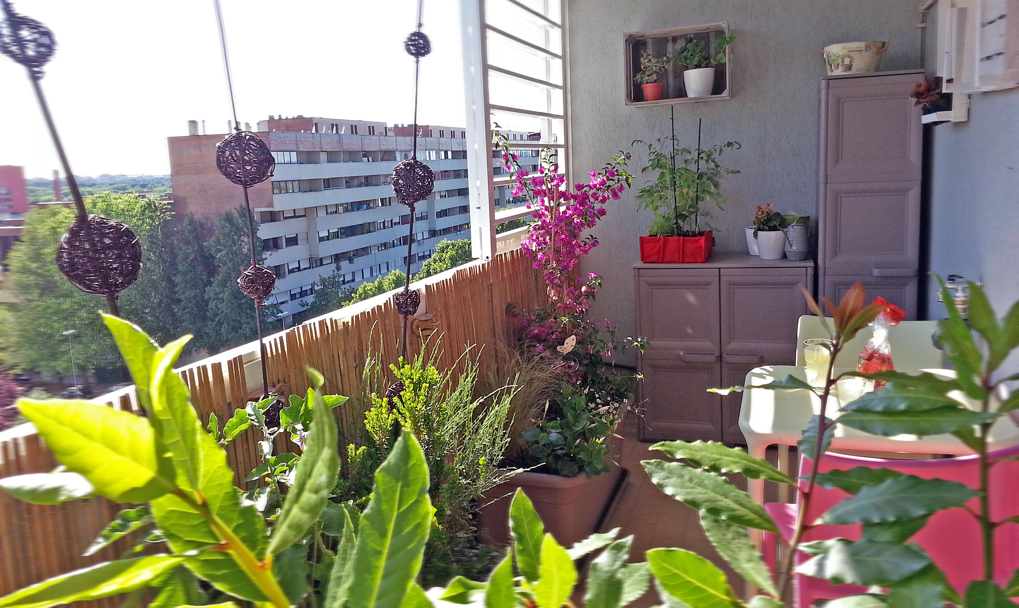 Piccolo Giardino Sul Balcone : Nel balcone piccolo cè il giardino buono fabio masotta