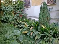 Un giardino segreto all'ombra dei palazzi